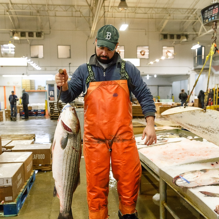 Hunts Point Fish Market. Photo by Kreg Holt/NYCEDC.