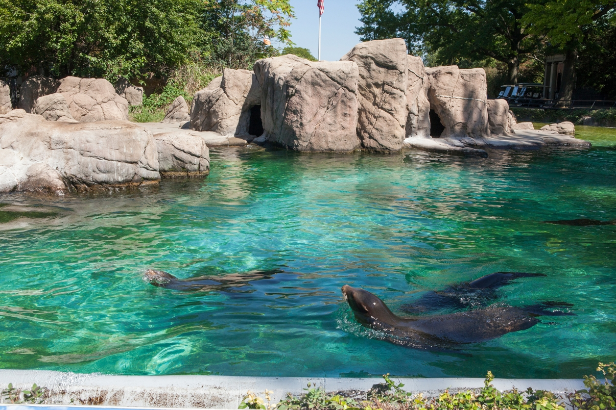 Bronx Zoo. Photo by Christopher Postlewaite/NYC and Company